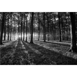 FOREST B & W