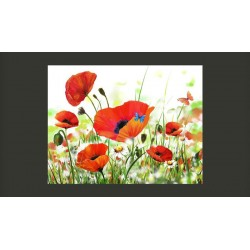 COUNTRY POPPIES