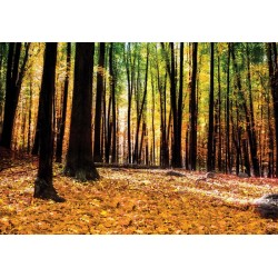 Bosques forestales