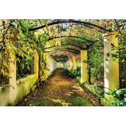 Garden Path Flowers Trees Nature