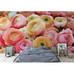 Flowers Peonies Colours