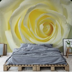 Rose Flower White Yellow