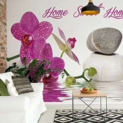 Zen Orchids Flowers Stones Water