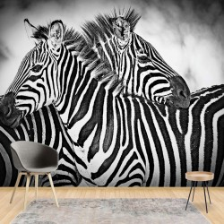 3605 - Zebras Black And White