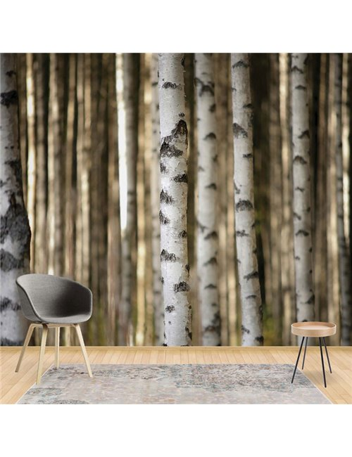 3612 - Birch Trees In The Forest
